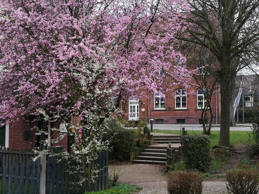 Schule im Frühling