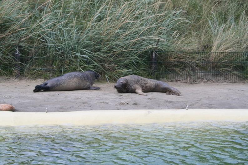 Seehundjäger