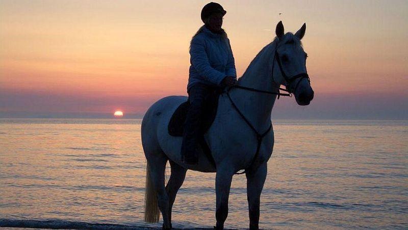 Sonnenuntergang am Ostseestrand hoh zu Roß - Gestüt Vorpommern
