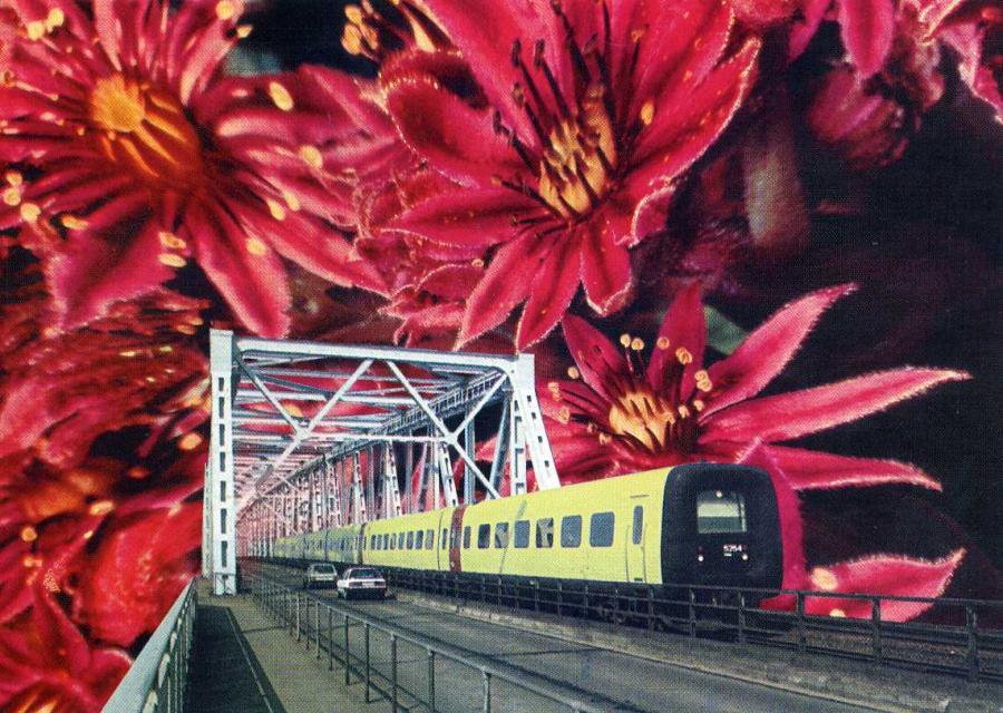 Sonntagsfahrt Die Blumenreise 1996