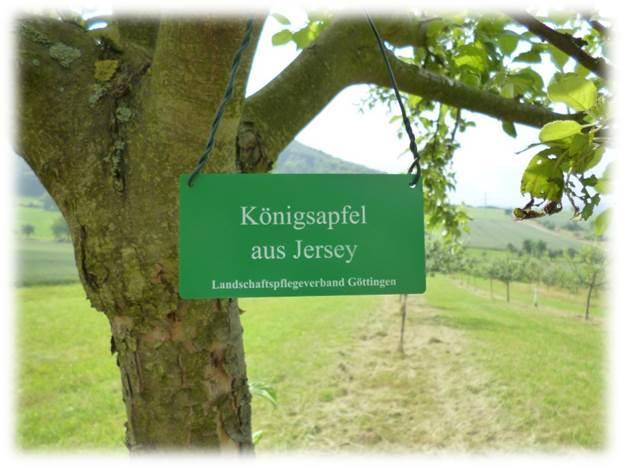 Sortengarten Baum mit Schild