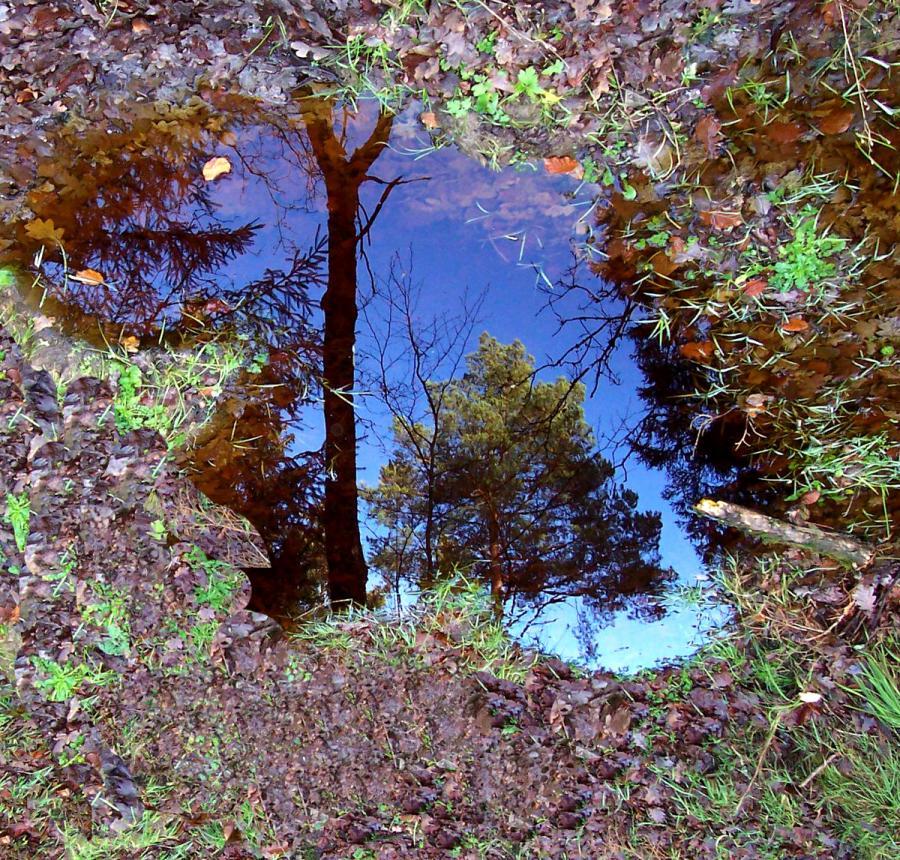 Spiegelbild der Natur