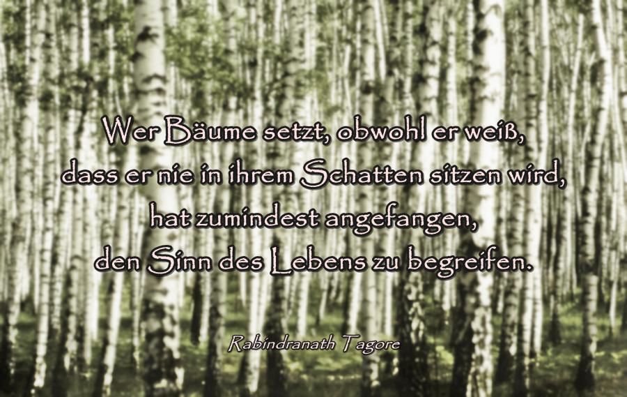 Spruch_Bäume_2.jpg