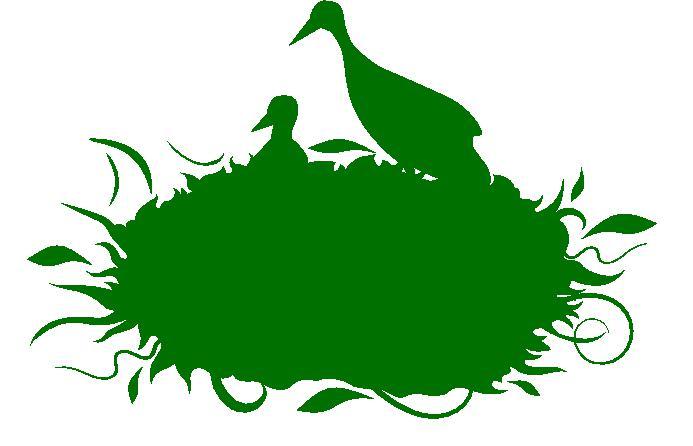 Storch Grün