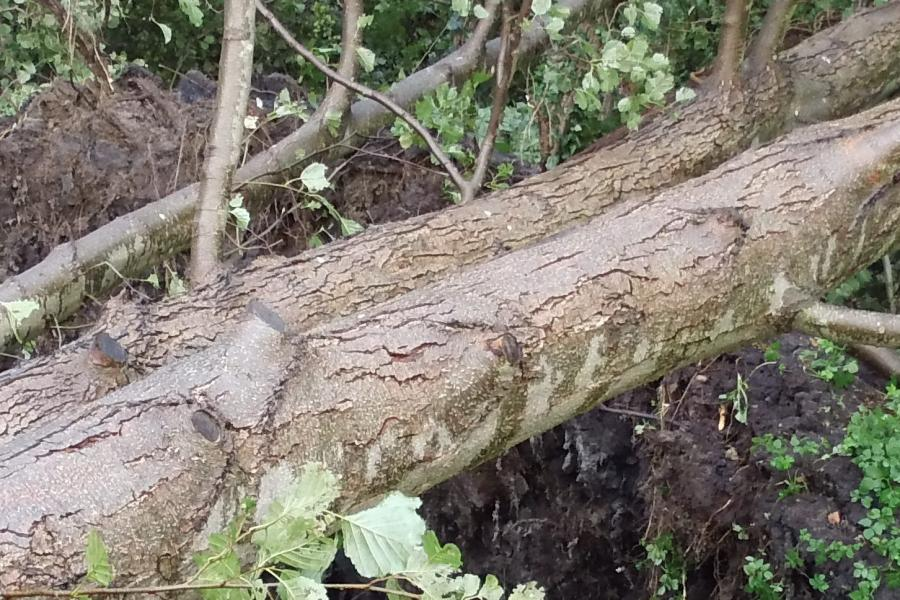 Viele umgestürzte Bäume auf der Seepromenade