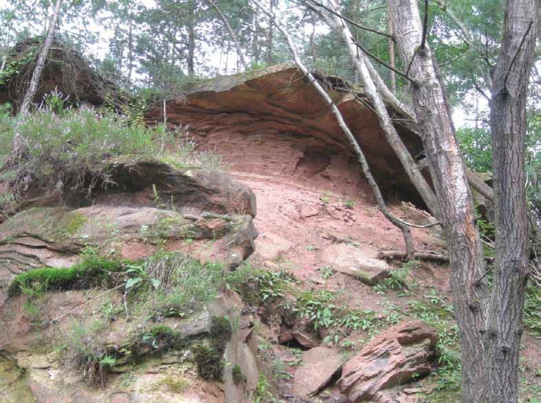 Inzwischen wachsen die stillgelegten Steinbrüche (hier ein Bild aus Hertlingshausen) zu und entwickeln sich zu wertvollen Biotopen