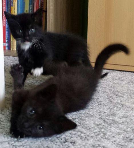Luise und Tessie