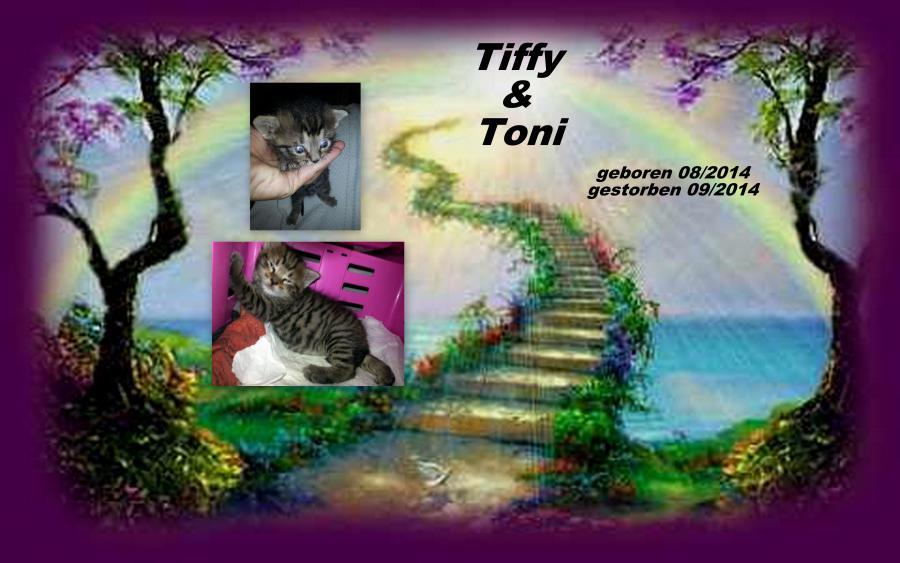 Tiffy  und Toni