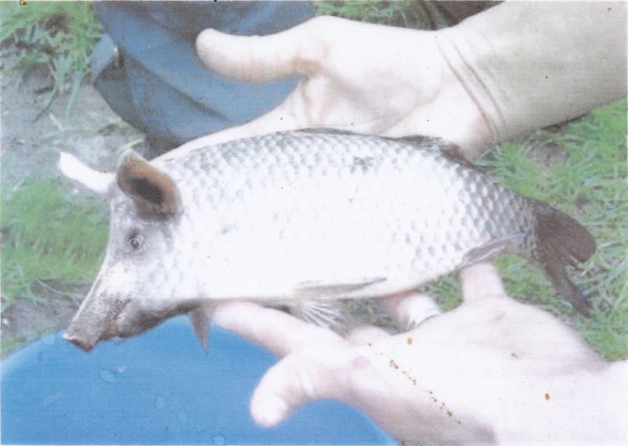 Seltene Fische