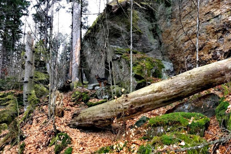 Urwaldsteig