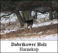 Dabrikower Holz Harnekop