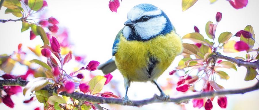 Vogel Blüten