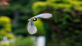 Vogel Startseite