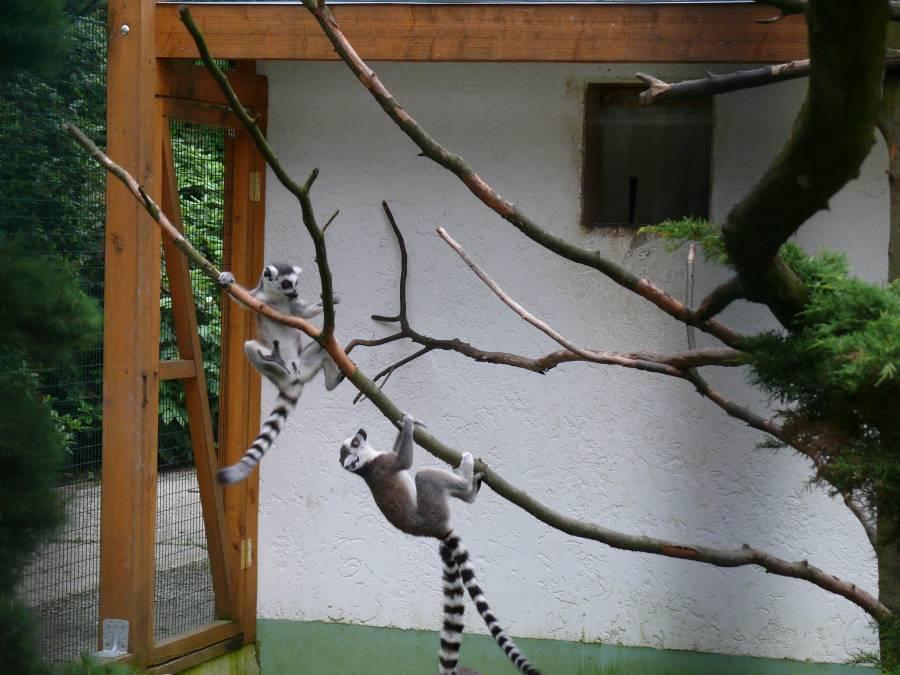 Vogelpark-1