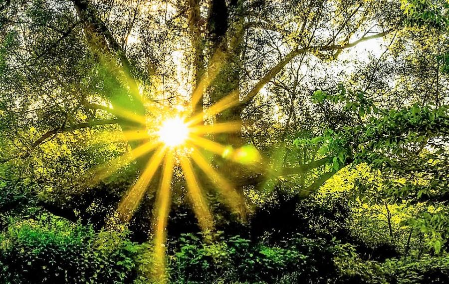 Sonne im Wald (by Barbara Ludwig)