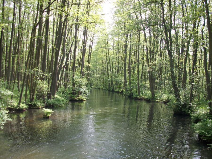 Waldkanal
