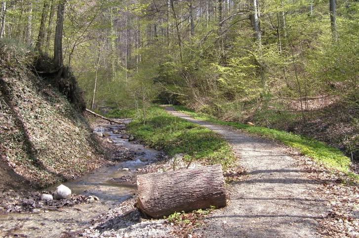 Wanderweg entlang eines Baches