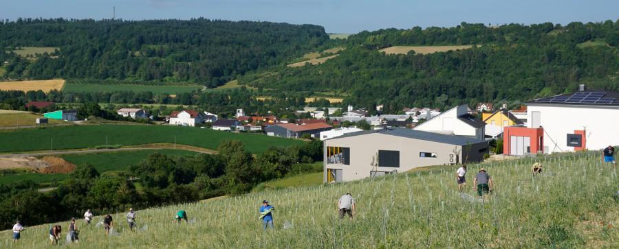 Arbeit im Bürgerweinberg  - den IgersWein'lern macht's viel Spaß!
