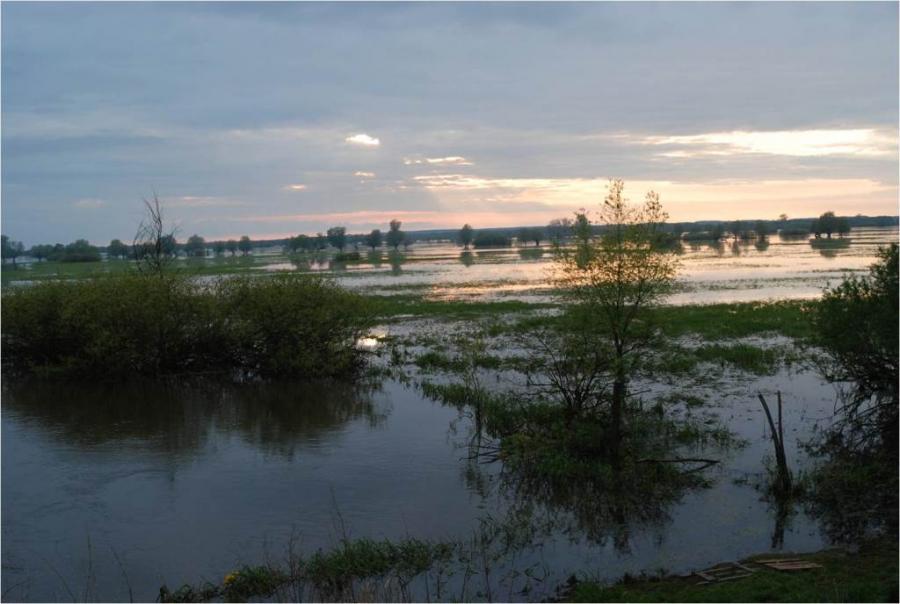 Ausgedehnte Überschwemmungsgebiete im Warthebruch