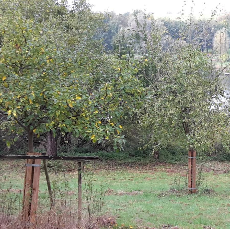 Wendebach Jungbäume
