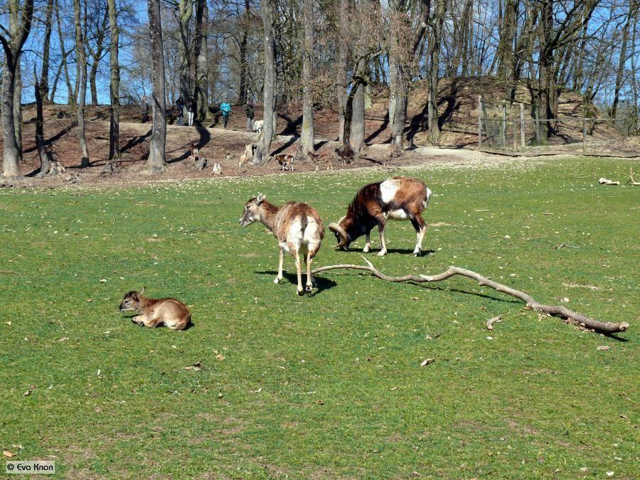 Wildpark-ortenburg-2