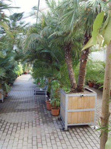 Palmenvielfalt