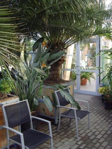 Stühle unter Palmen, inmitten exotischer Gewächse
