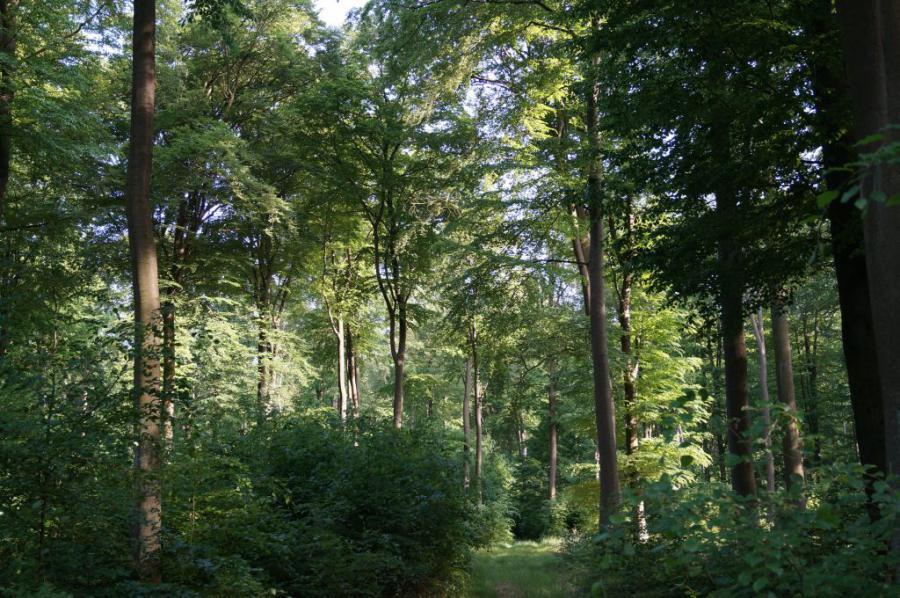 Wittstocker Heide1