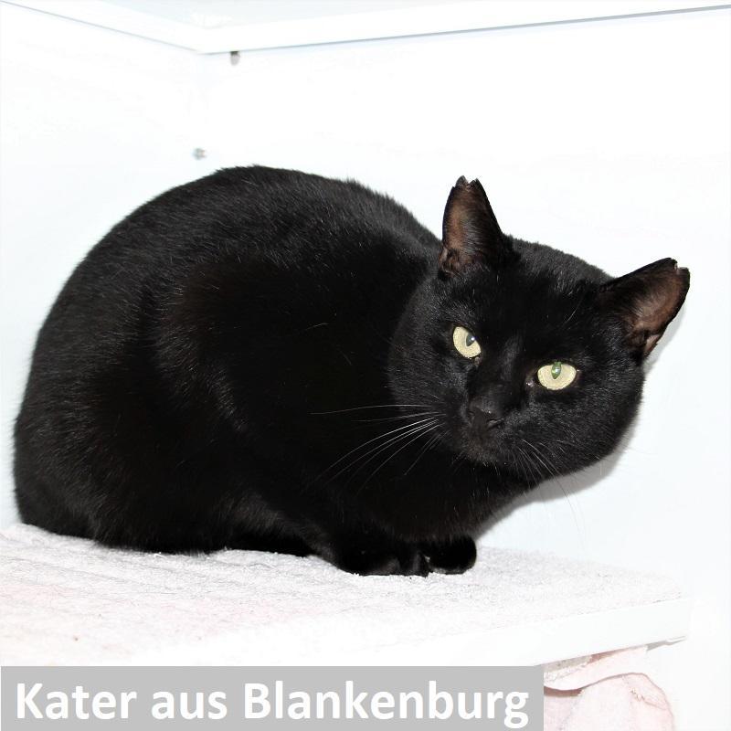 Kater Blankenburg