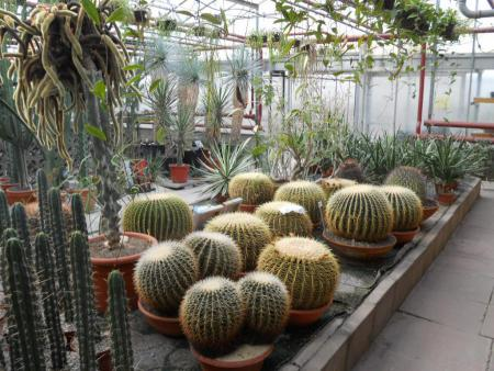 Pflanzen zum Staunen