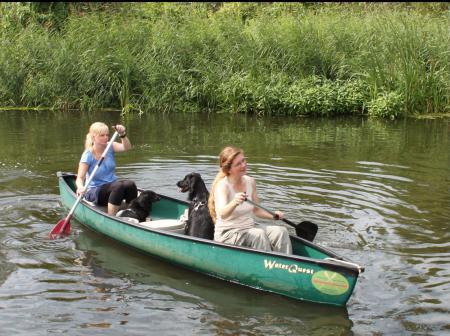 Hund im Boot
