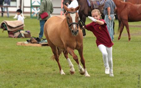 Lisanne Dreier / Brandenburger Pferdesommer 2013
