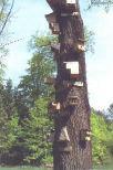 Naturlehrpfad in der Altmärkischen Schweiz