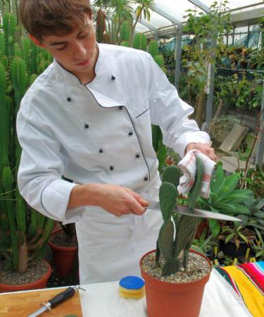 Gemüseopuntia Opuntia Verdura 1