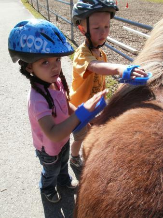 Ponypflege