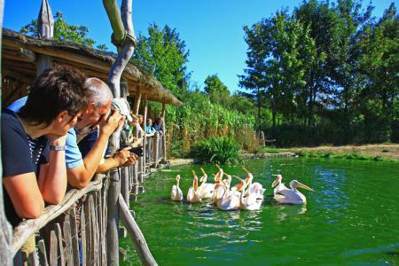 Vogelpark Marlow - Pelikanfütterung