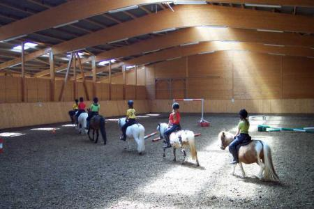 Abteilung-Pony