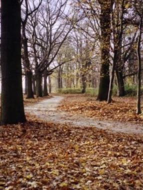 Wege im Park