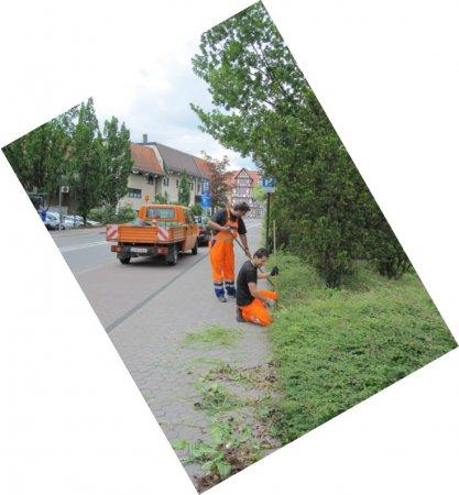 Straßenbegleitgrün
