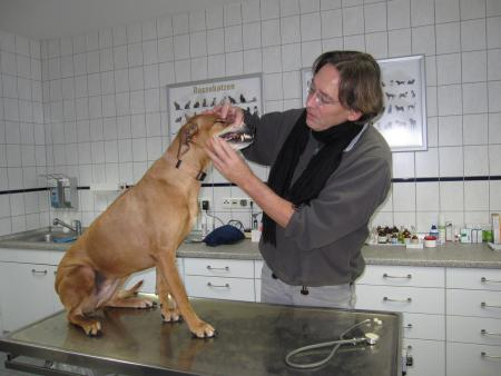 Tierarzt Dr. Michael Berkner