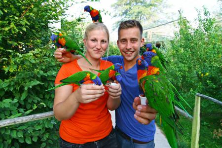 Vogelpark Marlow - Fütterung der Loris