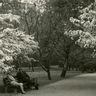 Lietzenseepark, angelegt 1919-20 von Erwin Barth, fotografiert 1934 von Jürgen Barth. (Foto: LDA Berlin, Archiv Gartendenkmalpflege)