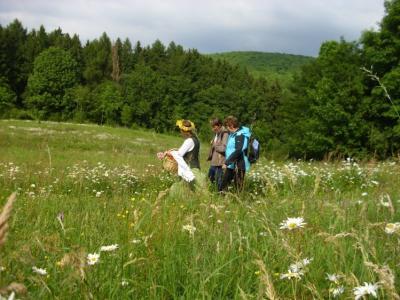 Wiesen und Wälder als lebende Hausapotheken
