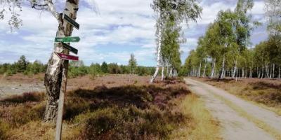 Die Birkenallee durch das Naturschutzgebiet Forsthaus Prösa