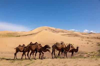 Wüste Gobi, Foto: Holger Fritzsche