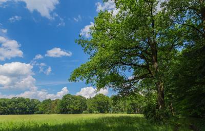 Märkischer Wald, Foto: CC